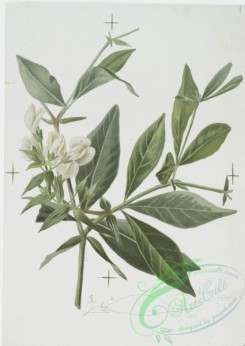 prang_cards_botanicals-00129 - 0692-Prints depicting drawings and sketches of plants and flowers 107302
