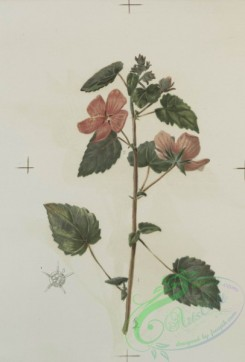 prang_cards_botanicals-00134 - 0693-Prints depicting drawings and prints of plants and flowers 107307