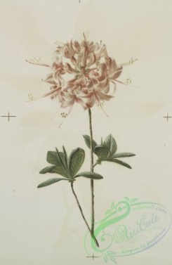 prang_cards_botanicals-00135 - 0693-Prints depicting drawings and prints of plants and flowers 107308