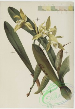 prang_cards_botanicals-00147 - 0773-Orchids 107643