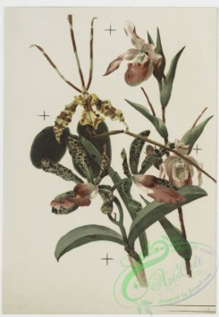 prang_cards_botanicals-00148 - 0774-Orchids 107644
