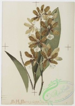 prang_cards_botanicals-00149 - 0774-Orchids 107645