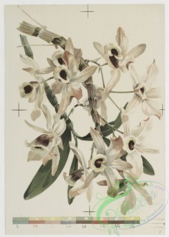prang_cards_botanicals-00150 - 0775-Orchids 107646