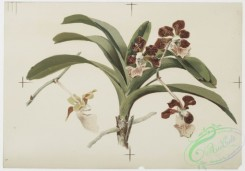 prang_cards_botanicals-00151 - 0775-Orchids 107647