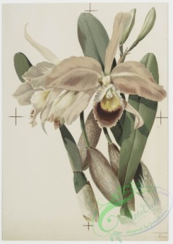prang_cards_botanicals-00152 - 0776-Orchids 107648