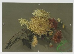 prang_cards_botanicals-00154 - 0818-Chrysanthemum 7, and Duchesse Rose 2 107817