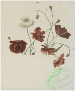 prang_cards_botanicals-00166 - 0857-Flower fancies-calendar with text, depicting roses and poppies 108050
