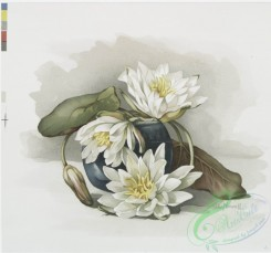 prang_cards_botanicals-00178 - 0910-Two prints entitled 'chrysanthemums in glass bowl' and 'waterlilies in blue jar.' 108236