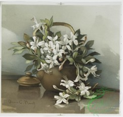 prang_cards_botanicals-00179 - 0913-Two prints entitled 'wild azaleas' and 'Japan quince 2.' 108240