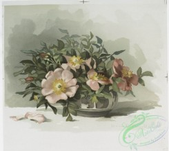 prang_cards_botanicals-00181 - 0914-Two prints entitled 'wild roses 3' and 'wild roses 4.' 108242