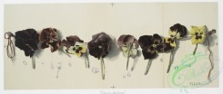 prang_cards_botanicals-00183 - 0915-Bluebeard's Wives-Study of Pansies 108244