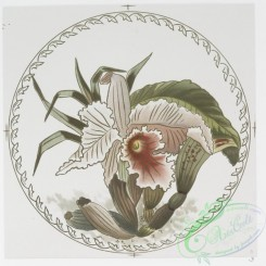 prang_cards_botanicals-00186 - 0920-China Plates (depicting flowers.) 108258