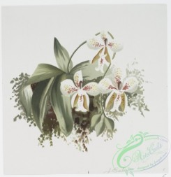 prang_cards_botanicals-00188 - 0921-Prints depicting plants and flowers 108260