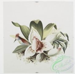 prang_cards_botanicals-00189 - 0921-Prints depicting plants and flowers 108261