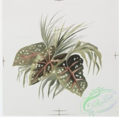 prang_cards_botanicals-00191 - 0923-China Painting 1 (prints depicting leaf and plant forms.) 108264