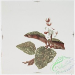 prang_cards_botanicals-00192 - 0925-China Painting 1 (prints depicting plant and flower forms) 108273