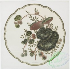 prang_cards_botanicals-00194 - 0926-China Painting 1 (prints depicting plant and flower forms.) 108276