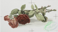 prang_cards_botanicals-00197 - 0928-Two Christmas cards entitled 'carnations 2' and 'jacqueminot roses 3.' 108279