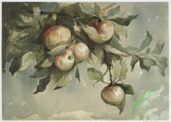 prang_cards_botanicals-00202 - 0938-Study of Apples 108305