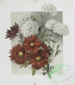 prang_cards_botanicals-00204 - 0944-(The golden flower-prints depicting red, white and pink flowers.) 108338