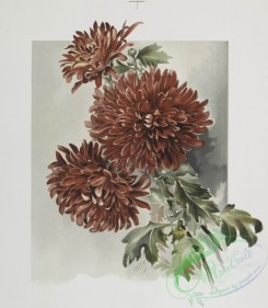 prang_cards_botanicals-00206 - 0945-(The golden flower-prints depicting pink and red flowers.) 108340