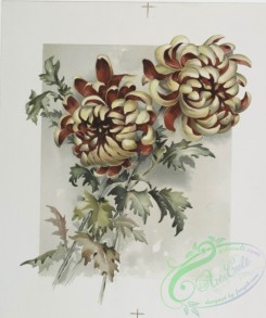 prang_cards_botanicals-00210 - 0947-The golden flower-prints depicting flowers 108344