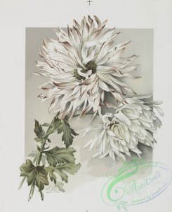 prang_cards_botanicals-00211 - 0947-The golden flower-prints depicting flowers 108345