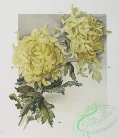 prang_cards_botanicals-00216 - 0951-(The golden flower-prints depicting yellow flowers with the word 'Kioto,' a woman with long golden hair and cape surrounded by golden flowers and t 108364