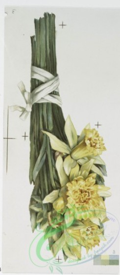 prang_cards_botanicals-00232 - 1039-Mayflower, Easter Lilies, Bunch of Daffodils (Easter cards depicting flowers, Christmas cards depicting young girl with umbrella) 100131