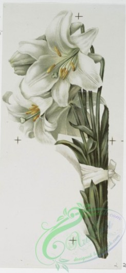 prang_cards_botanicals-00234 - 1039-Mayflower, Easter Lilies, Bunch of Daffodils (Easter cards depicting flowers, Christmas cards depicting young girl with umbrella) 100133
