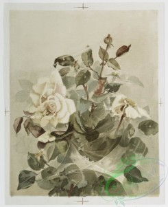 prang_cards_botanicals-00237 - 1067-Prints entitled 'the last rose of summer' and 'strolling musicians,' depicting a flower with a human face, cobwebs, snow, hoboes and trees 100264