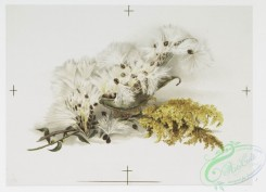 prang_cards_botanicals-00254 - 1094-Christmas cards depicting dandelions and butterflies 100345