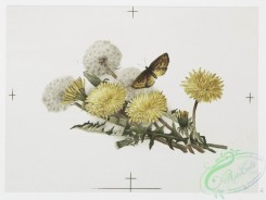 prang_cards_botanicals-00255 - 1094-Christmas cards depicting dandelions and butterflies 100346