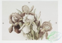 prang_cards_botanicals-00256 - 1099-Christmas and Easter cards depicting flowers 100354