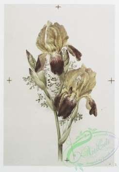 prang_cards_botanicals-00257 - 1099-Christmas and Easter cards depicting flowers 100355