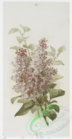 prang_cards_botanicals-00262 - 1133-Valentines, Christmas, Easter and advent of spring cards entitled 'double cherry blossom,' 'purple lilac 2' and 'Rive d'or roses 2.' 100485