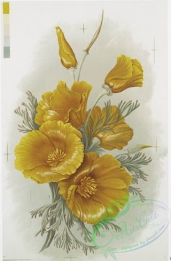 prang_cards_botanicals-00296 - 1209-Christmas cards depicting girls, fields, doll and a print entitled 'California Poppies' 100823