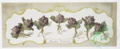 prang_cards_botanicals-00298 - 1211-Madcap violets, Johnny-jump-ups (prints with text and depictions of flowers) 100837