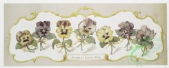prang_cards_botanicals-00299 - 1211-Madcap violets, Johnny-jump-ups (prints with text and depictions of flowers) 100838