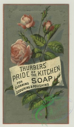 prang_cards_botanicals-00336 - 1407-Trade cards depicting flowers and birds 101672