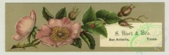 prang_cards_botanicals-00338 - 1412-Trade cards depicting flowers and the Long Island Railroad summer schedule for 1880 depicting ships, beaches, Block Island, Greenport, Long Beach, New 101699