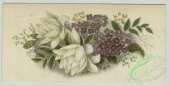 prang_cards_botanicals-00346 - 1509-Trade cards depicting flowers and a portrait of a child 102139