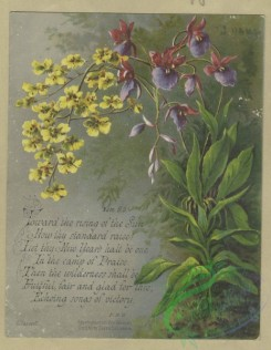prang_cards_botanicals-00355 - 1604-Trade cards depicting flowers, butterflies, a chocolate stand, a lake and boating 102577