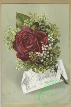 prang_cards_botanicals-00358 - 1614-Trade cards depicting flowers 102603