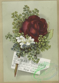 prang_cards_botanicals-00361 - 1614-Trade cards depicting flowers 102606