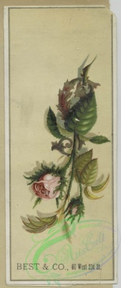 prang_cards_botanicals-00363 - 1635-Trade cards depicting flowers, children, calligraphy, cats, acorns, thread and autumn foliage 102739