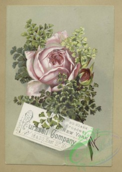 prang_cards_botanicals-00366 - 1637-Trade cards depicting flowers 102751