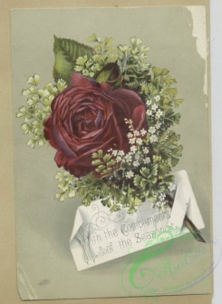 prang_cards_botanicals-00367 - 1637-Trade cards depicting flowers 102752