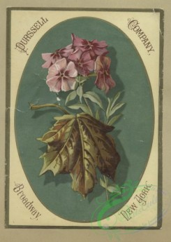 prang_cards_botanicals-00373 - 1682-Trade and Easter cards depicting flowers, leaves and babies hatching from eggs 103045