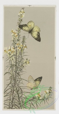 prang_cards_butterflies-00013 - 0254-Christmas and New Year cards depicting plants, flowers, and butterflies 104350